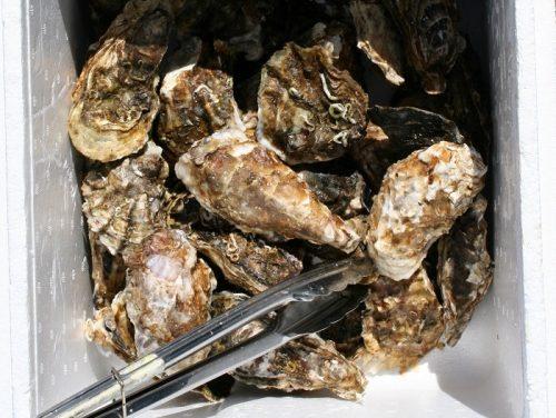 浦村牡蠣食べ放題の食プランは、いろいろあります